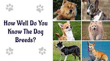 How Well Do You Know The Dog Breeds?