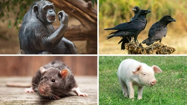 10 of the World's Smartest Animals